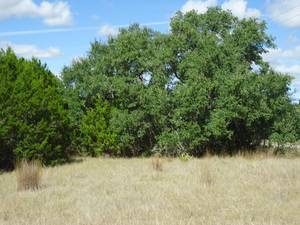 Texas Real estate - Property in BLANCO,TX